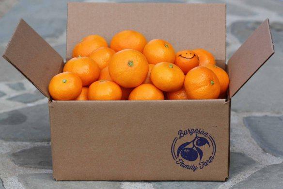 orchard harvest box