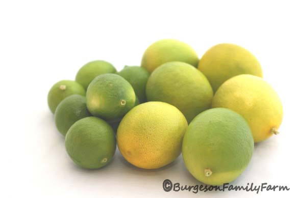 key-and-bearss-limes