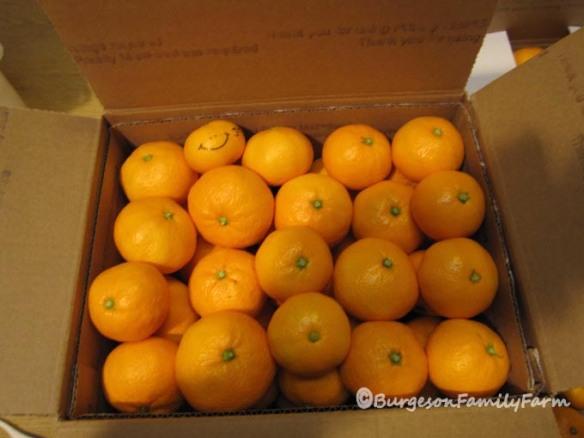 our-9-pound-mandarin-box-web