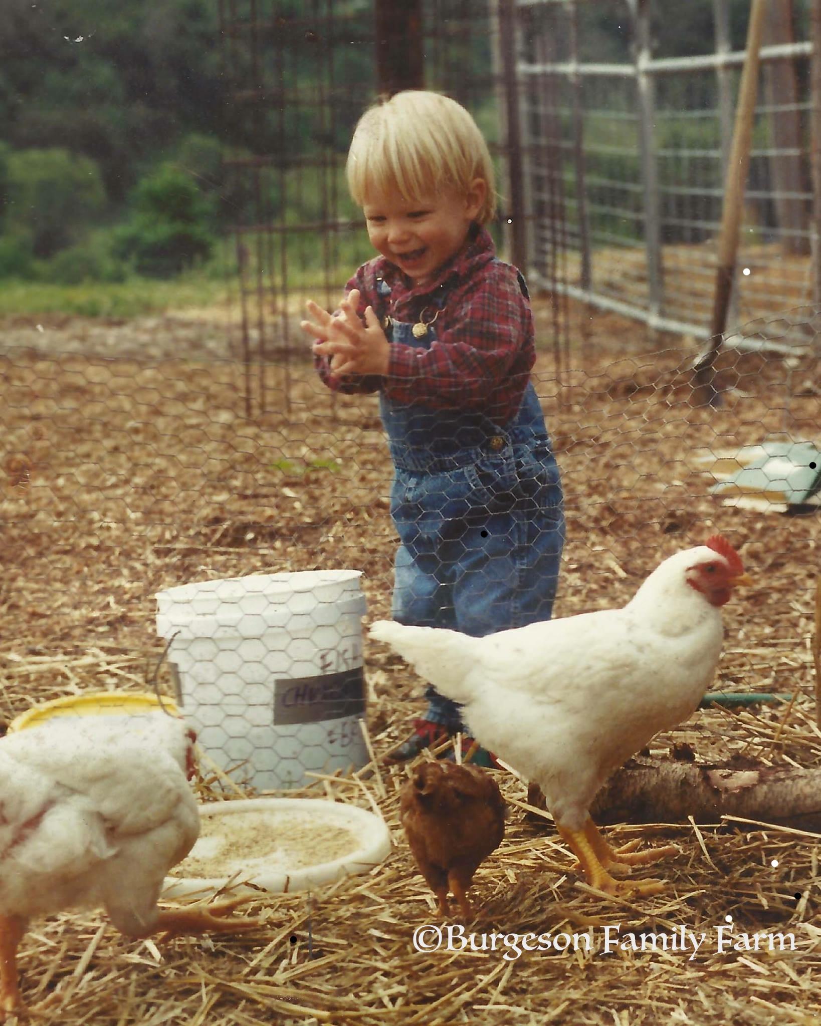 evan chickens copyrignht