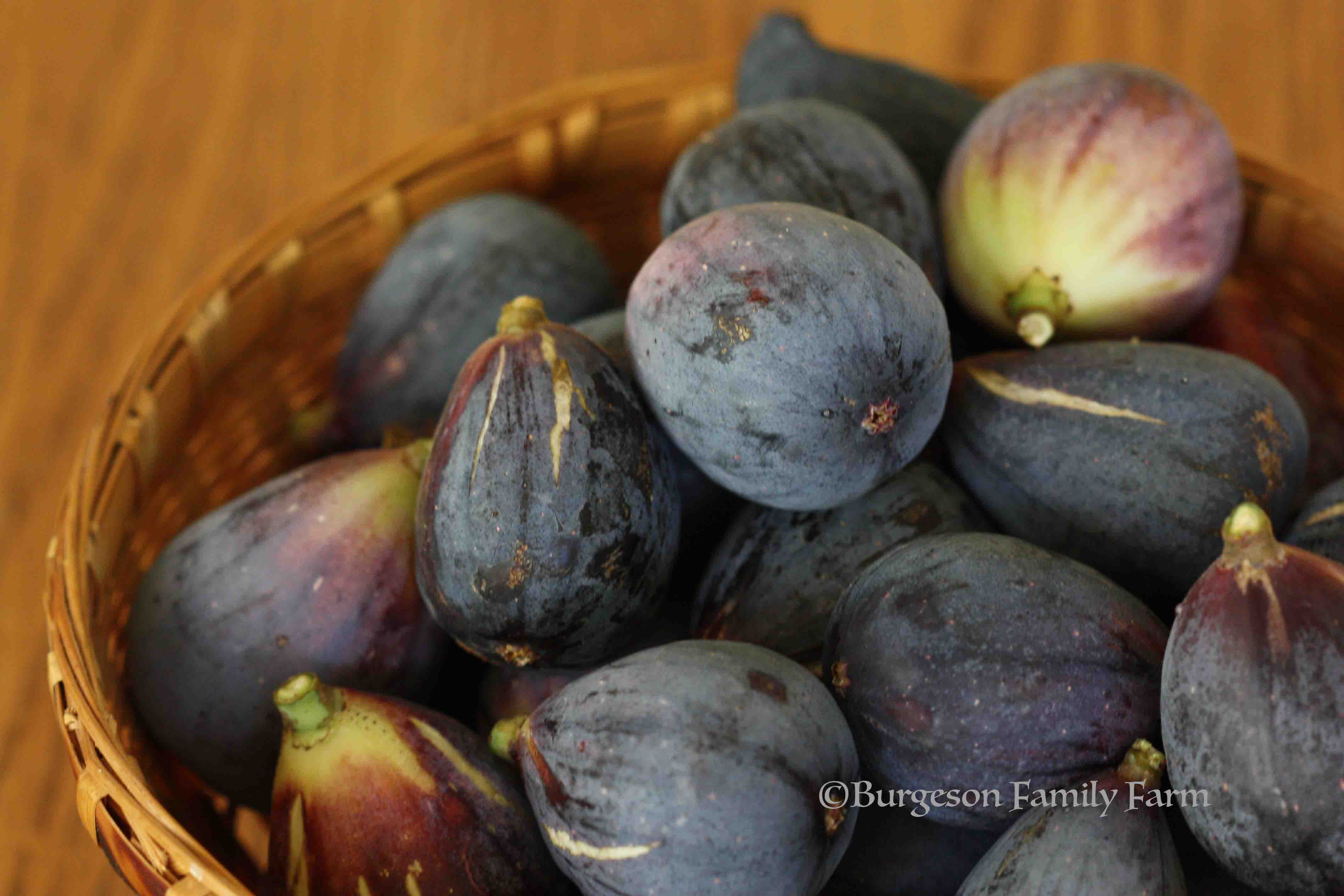 figs-in-basket-1